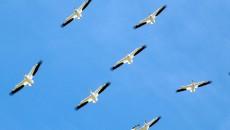 birds-112083_1920