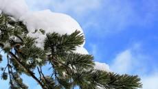 choinka śnieg