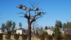 budka ptaki
