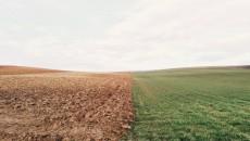 wieś_pole