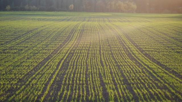 0728_roln_pole_uprawa_rolnictwo_rola_zboże_siew