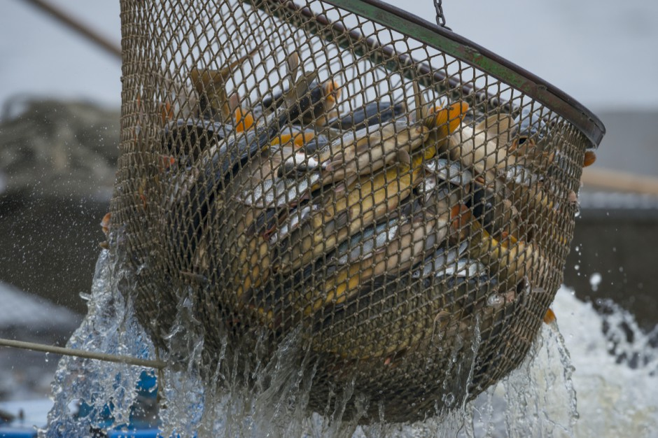 limity połowów