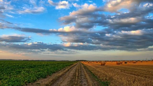 pole_uprawa_rolnictwo