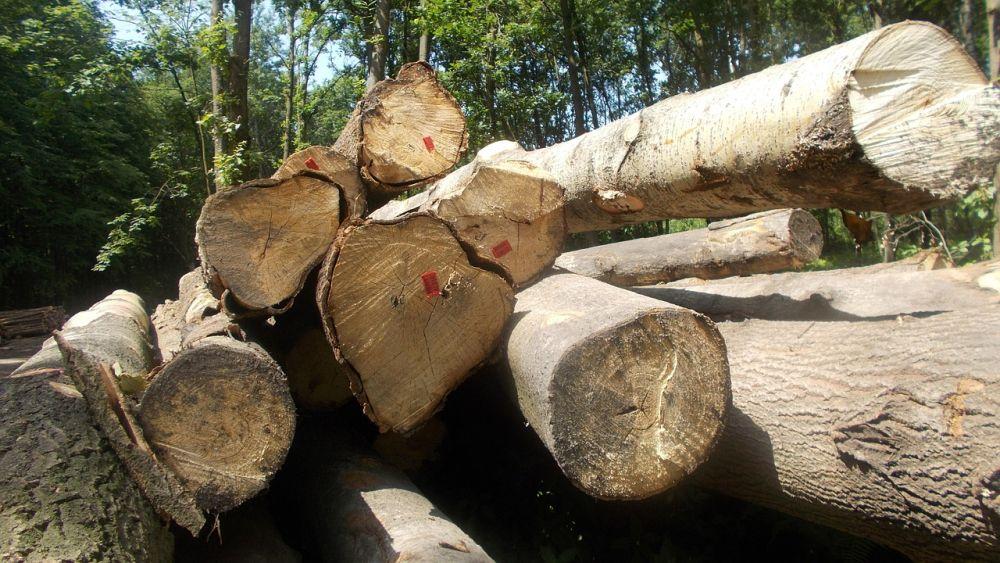 0214_namysłów drzewa wycinka las