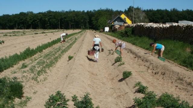 0522_zbiory obcokrajowcy praca rolnictwo pracownicy sezonowi praca sezonowa